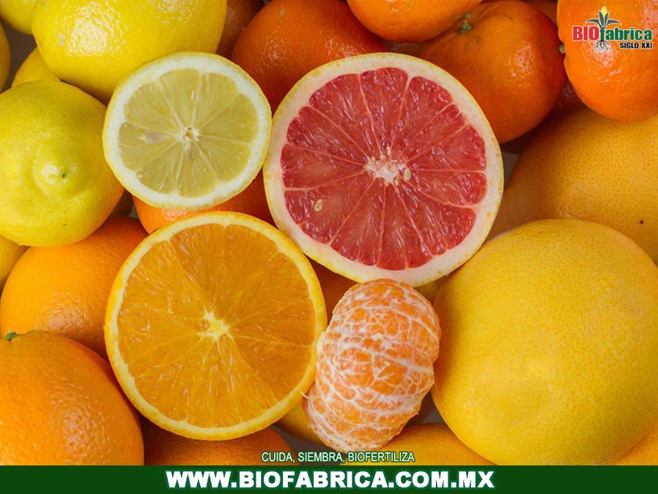 BioFcit