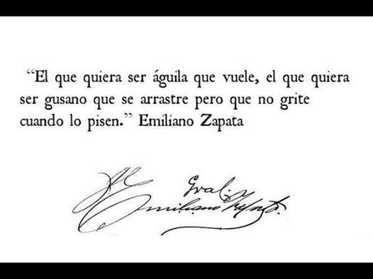 Zapata gusa
