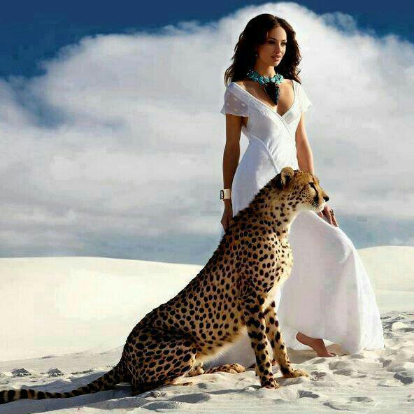 bella gepard