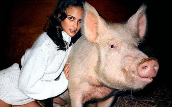 belleza porcina