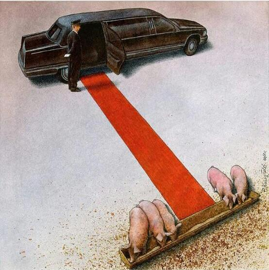 cerdo alfombra