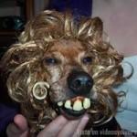 dientes perro
