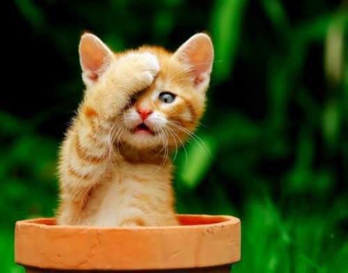 gatito lin