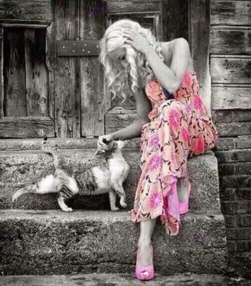 gato con bella