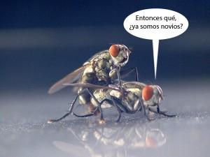 mosacas