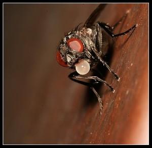 mosca...