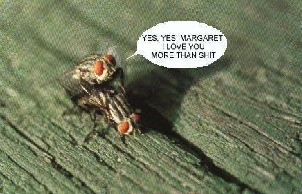 moscas c 3