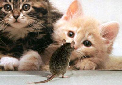 ratoncito valiente