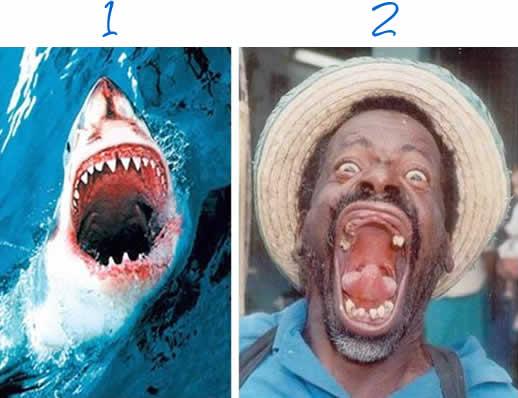 tiburon-dientes